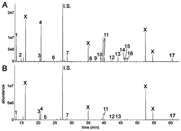 GCMS chromatograms for irradiated HepG2 hepatocellular carcinoma cells and HMCL-7304 myotubes.