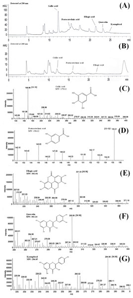 Chromatograms of (A) BLE and (B) BSE and the mass to charge ratio (m∕z) of (C) gallic acid, (D) protocatechuic acid, (E) ellagic acid, (F) quercetin and (G) kaempferol.