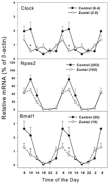 Effects of Zuotai on the expression of clock master control gene Clock, Npas2 and Bmal1.