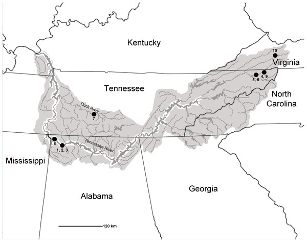 Map of Tennessee River Basin. Shaded areas show the extent of the Basin.