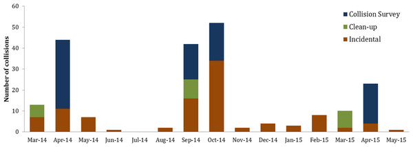 Seasonal distribution of bird-window collisions binned by month at Duke University's West campus in Durham, NC.
