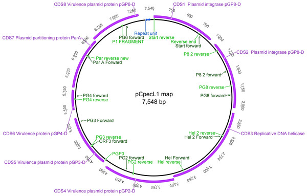 Graphical representation of the pCpecL1 and annotated CDSs, including primer locations.