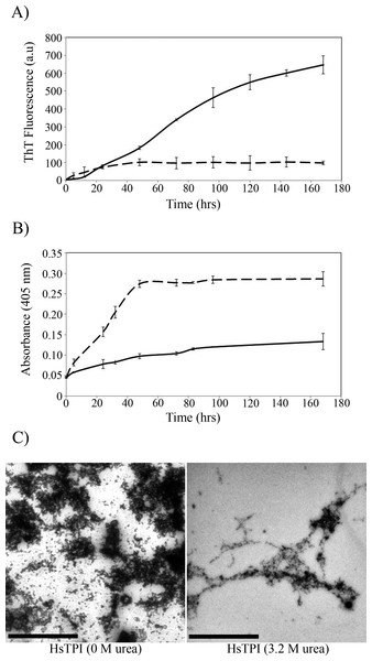 Aggregation kinetics followed by (A) ThT fluorescence and (B) by turbidimetry at 405 nm of HsTPIn (dashed line) and HsTPIurea (solid line). (C) TEM images of HsTPI aggregates at the final time point of aggregation.