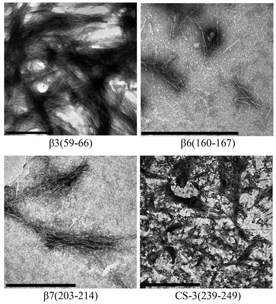 TEM images of peptides aggregates.