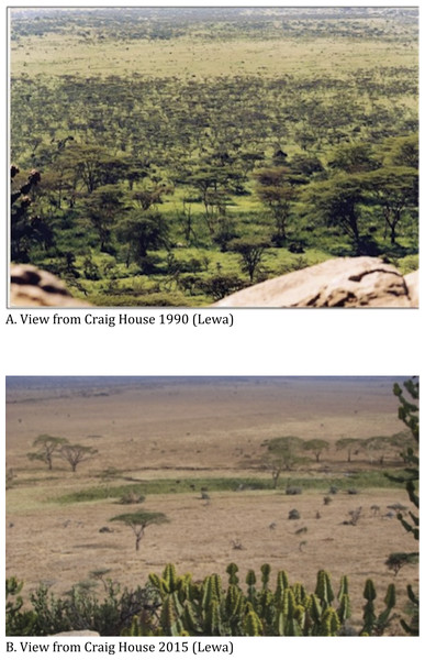 Changes in vegetation cover between 1990 and 2015. Lewa.