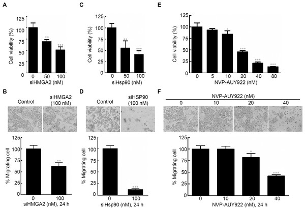 Effects of gene-specific inhibition of HMGA2 or Hsp90 and pharmaceutical inhibition of Hsp90 were similar.