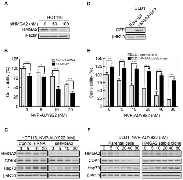 Expression levels of HMGA2 are responsible for NVP-AUY922 drug sensitivity.
