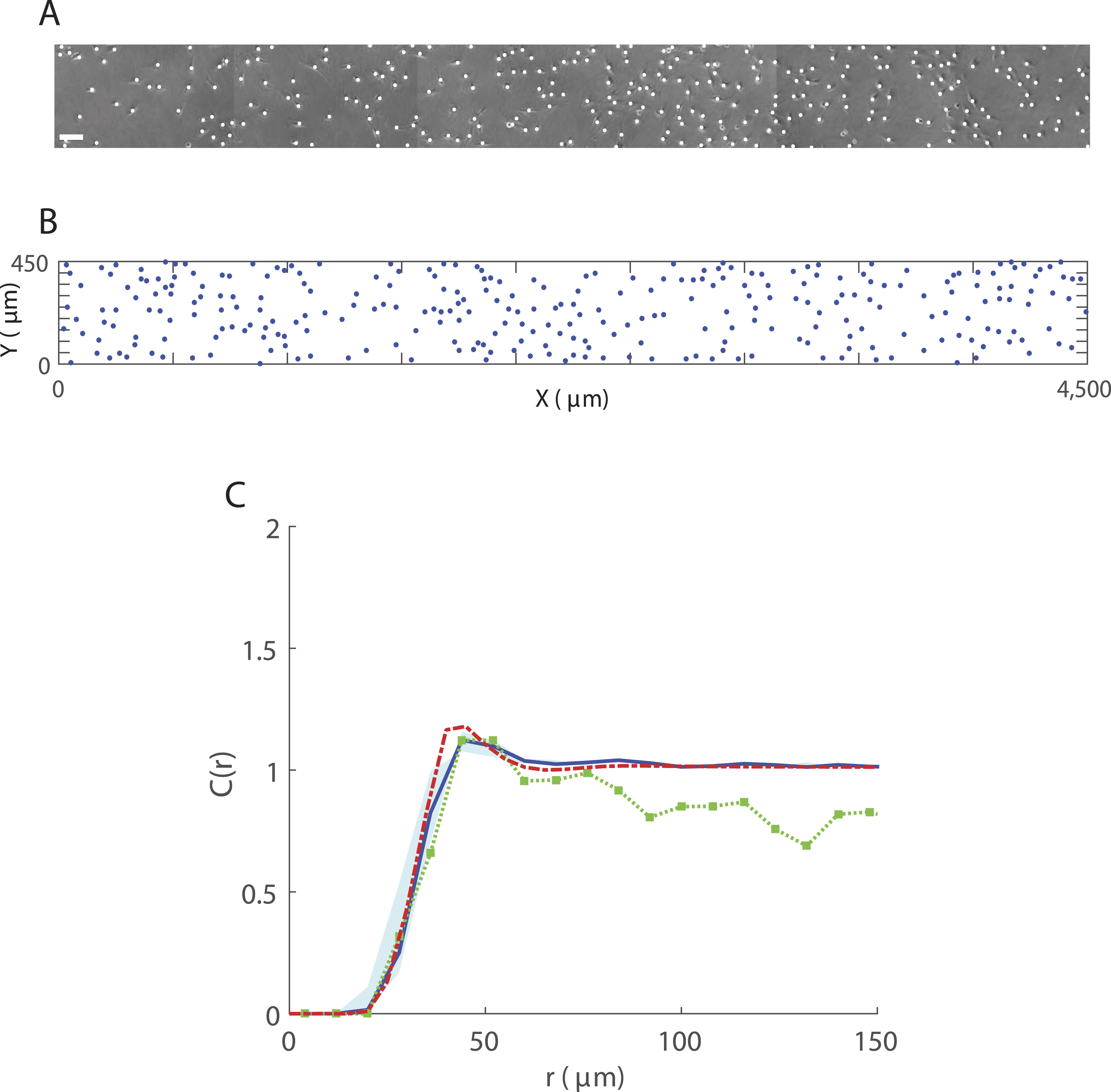 Spatial structure arising from neighbour-dependent bias in
