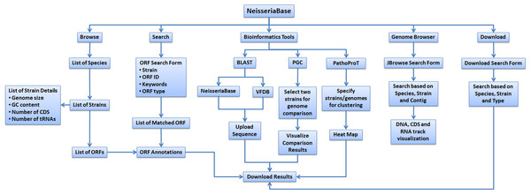 Flow diagram showing the overview of functionalities of NeisseriaBase.
