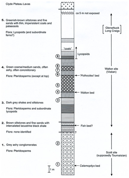 Composite stratigraphy of the Loch Humphrey Burn plant-bearing locality.