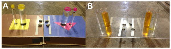 Colored U-tube (A) and Uncovered U-tube (B) experiments.