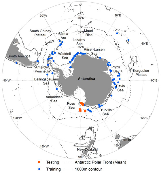 Occurrence of N. lanceopes in the Southern Ocean.