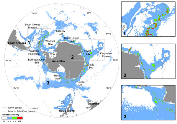 Predicted distribution of N. lanceopes at Present.