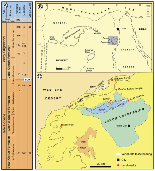 Major fossil localities in the Fayum Depression of northern Egypt.
