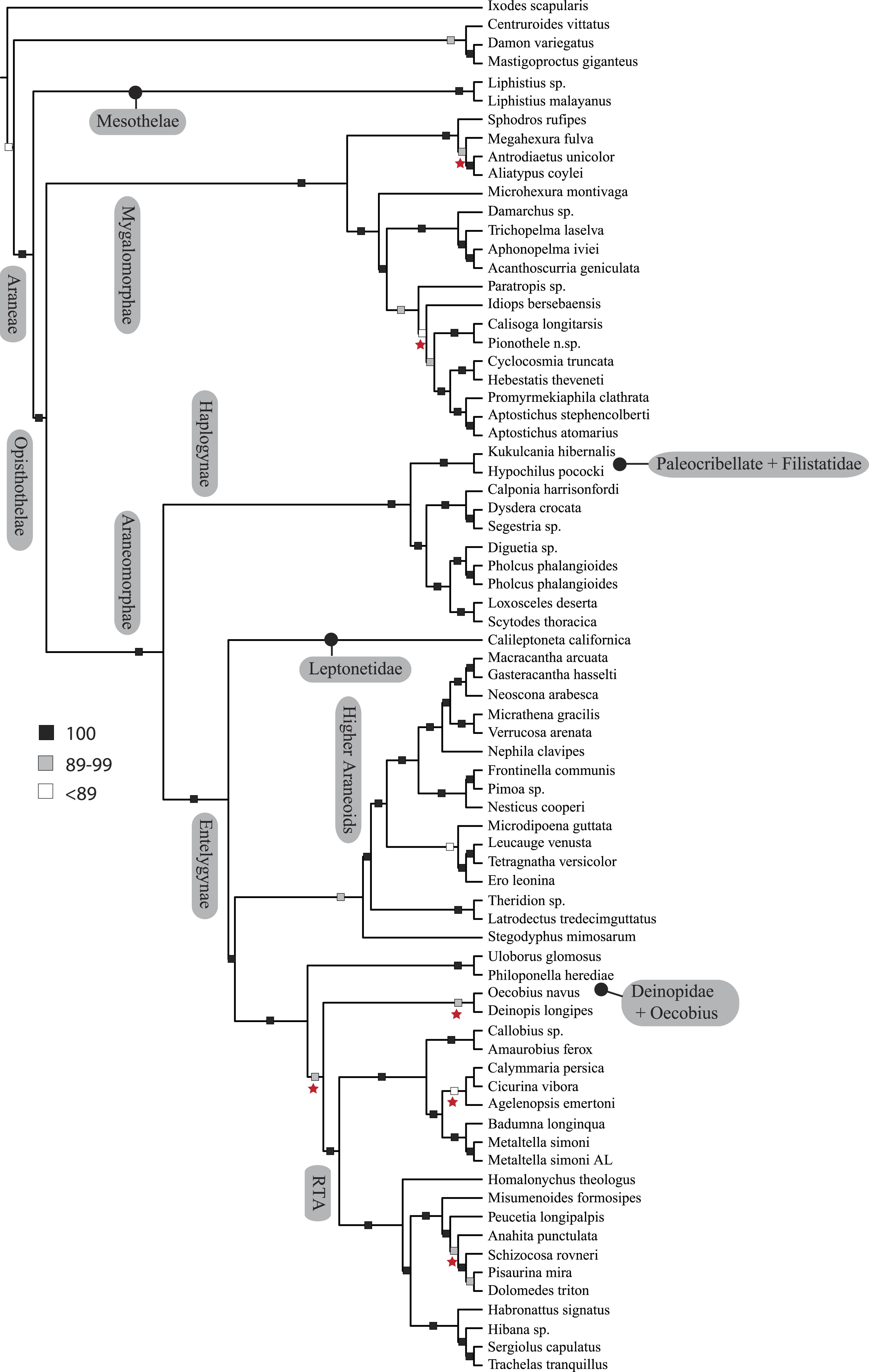 Spider phylogenomics: untangling the Spider Tree of Life [PeerJ]