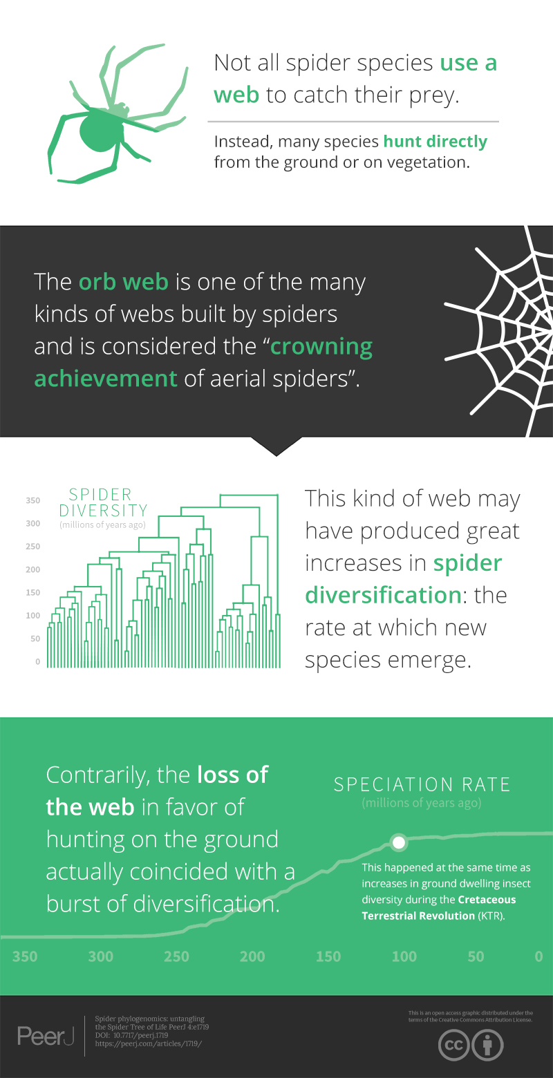 Spider phylogenomics: untangling the Spider Tree of Life [PeerJ]