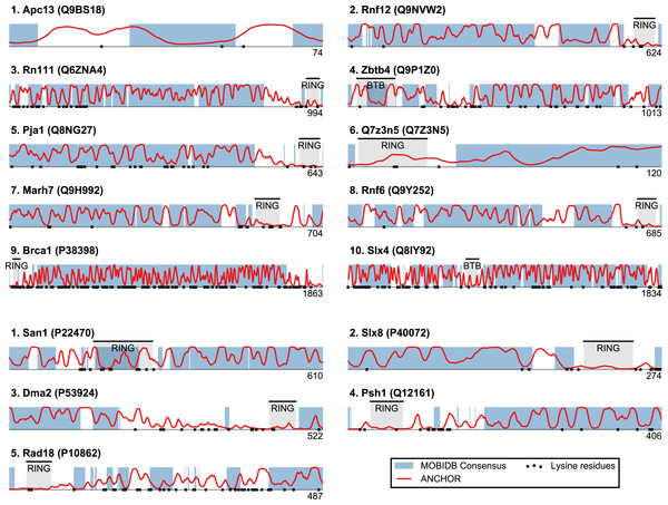 Identified San1-like E3 ligases show unusually low lysine content outside of the RING domain.