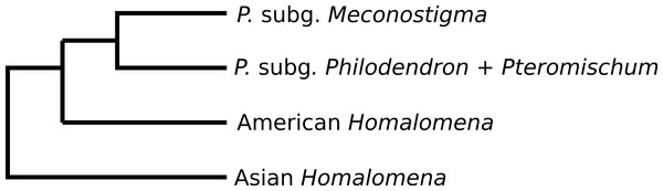 Phylogeny of Philodendron and Homalomena corroborated by the approximately unbiased (AU) test.