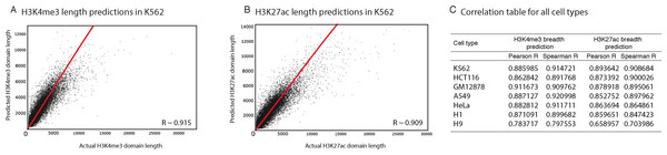 Our computational models can predict the length of H3K4me3 and H3K27ac domains with high precision.