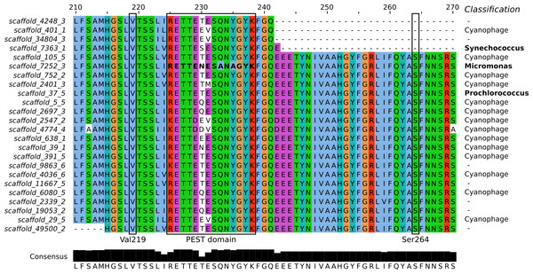 Sequence alignment of the PsbA proteins predicted from Dunk Island metagenomic scaffolds.
