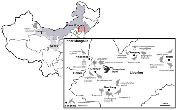 Distribution of Ornithurae birds from Early Cretaceous of China.