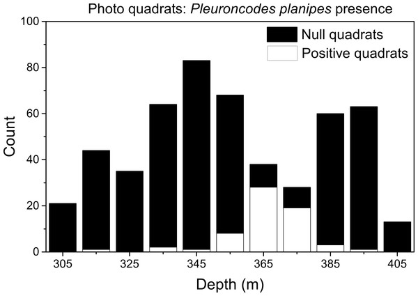 Frequency distribution of quadrats with null and positive Pleuroncodes planipes counts.