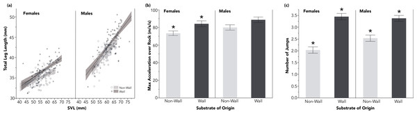 Lizards from wall sites had proportionally longer hindlimbs, relative to SVL (A). These longer hindlimbs corresponded to significantly faster accelerations among females over a rocky experimental substrate (B), and to significantly increased jumping propensity for both males and females (C).