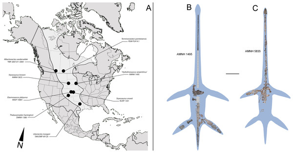 North American localities with elasmosaurid finds and elasmosaurid specimens here reviewed.