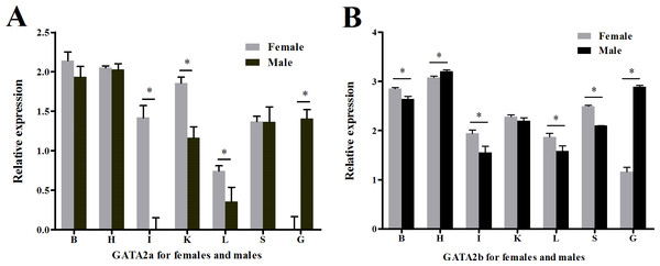 Relative expression levels of GATA2a and GATA2b in tongue sole tissues.