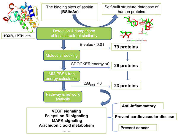 The pipeline of the structural proteome-wide prediction of aspirin targets.