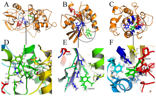 Diverse binding modes of aspirin to the putative targets.