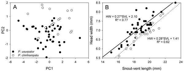 Morphometric comparisons between Psychrophrynella chirihampatu and P. usurpator.