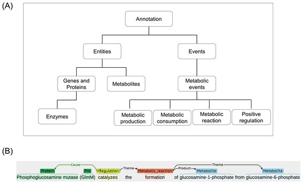 A schematic annotation of metabolic entities and events.