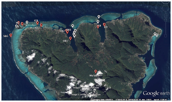 Map of sites surveyed along the northern coast of Moorea, French Polynesia.