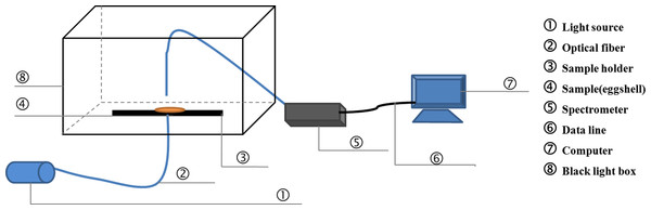 The schematic of the detection equipment for light transmission.