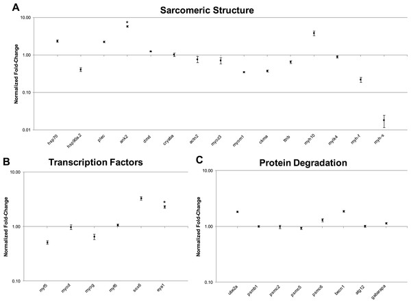 qRT-PCR analysis of 29 transcripts associated with the expression of sarcomeric genes.