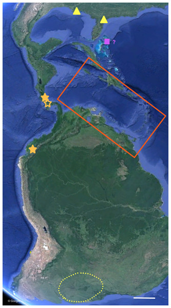 Distribution of Bulimulus sporadicus (yellow), B. guadalupensis, and B. diaphanus in the Neotropics.