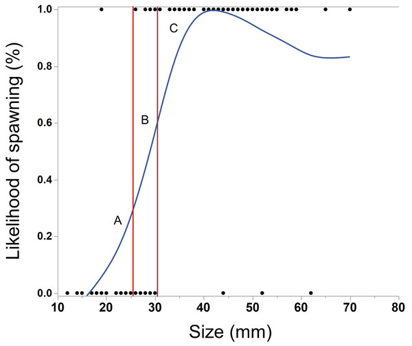 Cubic spline showing the effect of body size of M. leidyi on the likelihood to spawn.