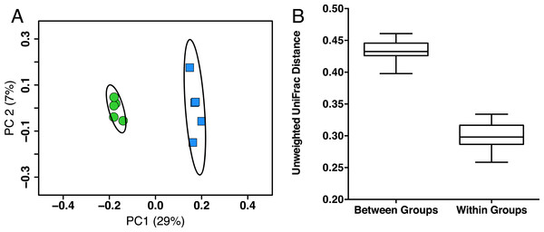 Young and aged mice are distinctive at the beta-diversity level using UniFrac metric.
