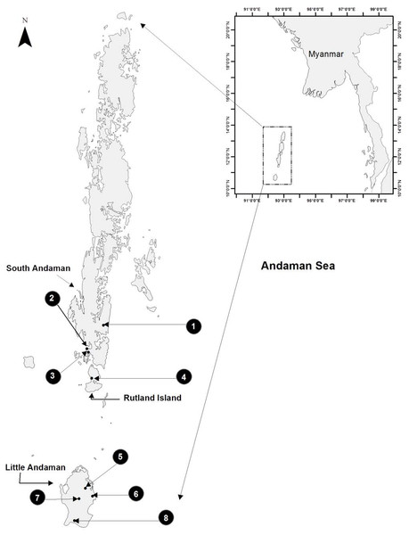 Study area map showing eight sampled sites on three islands of the Andaman archipelago.
