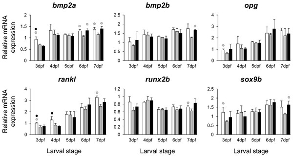 Expression differences of six potential skeletogenic targets of estrogen pathway in developing heads of zebrafish larvae across control and E2 treated groups.