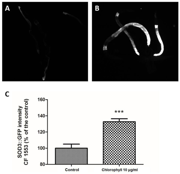 Chlorophyll induced up-regulation of SOD-3::GFP expression in strain CF1553.
