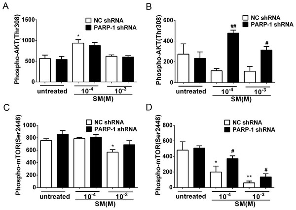 SM-induced suppression of Akt/mTOR signaling could be reversed by silencing PARP-1.