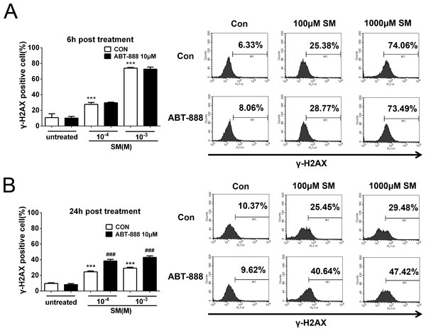 SM treatment caused a significant increase in the expression of γ-H2AX, which was further increased by ABT-888.
