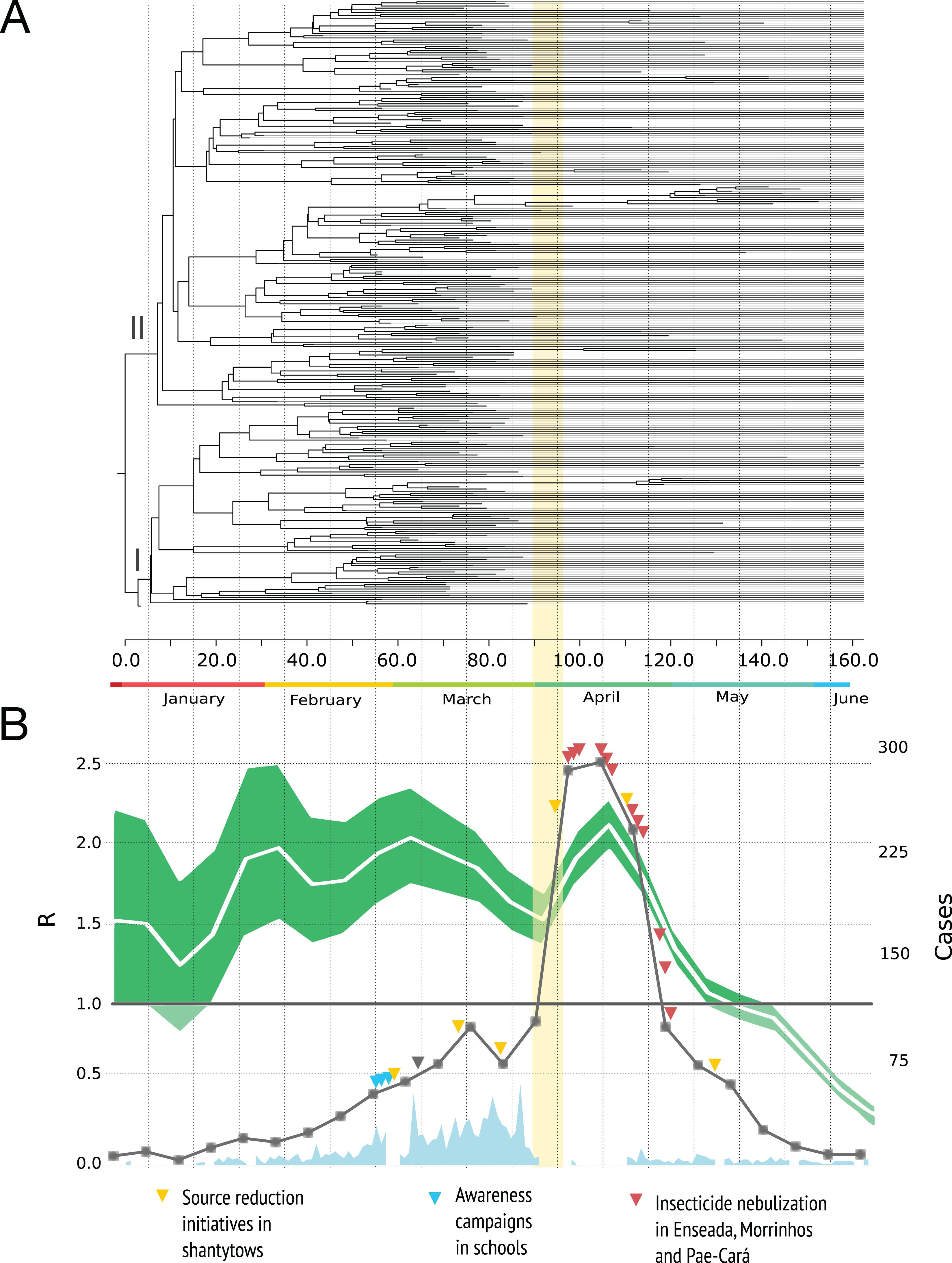 Epidemiological dynamics of an urban Dengue 4 outbreak in São ...