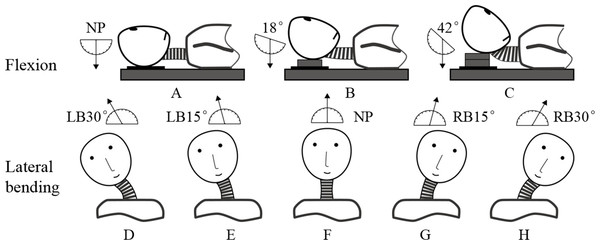 Three postures in flexion: (A) neutral position (NP), (B) first flexion at 18°, and (C) second flexion at 42°. Five postures in lateral bending: (D) left bending at 30°(LB30°), (E) left bending at 15°(LB15°), (F) neutral position (NP), (G) right bending at 15°(RB15°), and (H) right bending at 30°(RB30°).