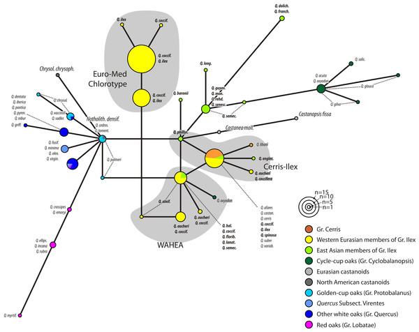 Haplotype network based on the trnH-psbA spacer.