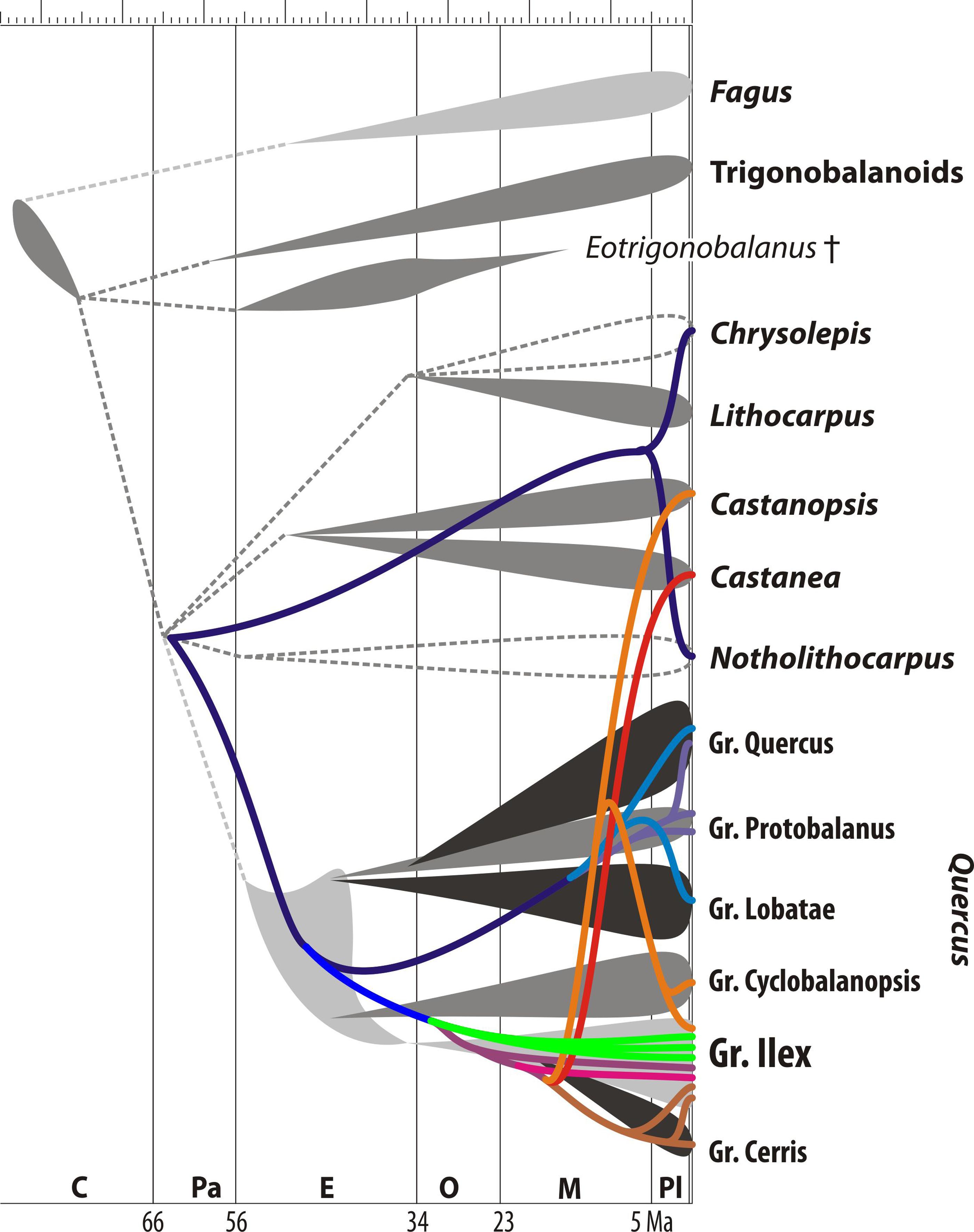 Plastome data reveal multiple geographic origins of Quercus