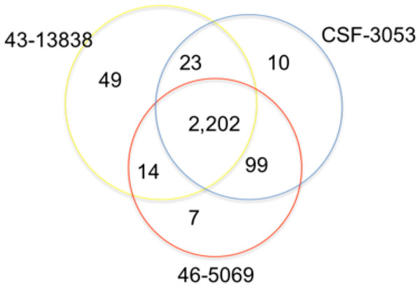 Distribution of single nucleotide polymorphisms in isolates CSF3053, 46-5069 and 43-13838.