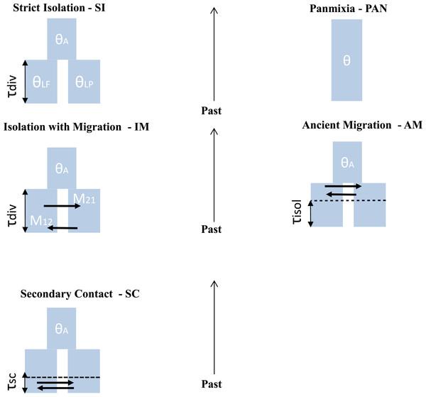 Different scenario of divergence between L. planeri and L. fluviatilis.